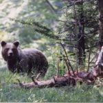 В Централен Балкан мечките се събудиха