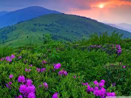 Три нови вида растения се появиха в Стара планина
