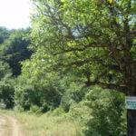 """Вековните букови гори в парка """"Централен Балкан"""" влизат в ЮНЕСКО"""