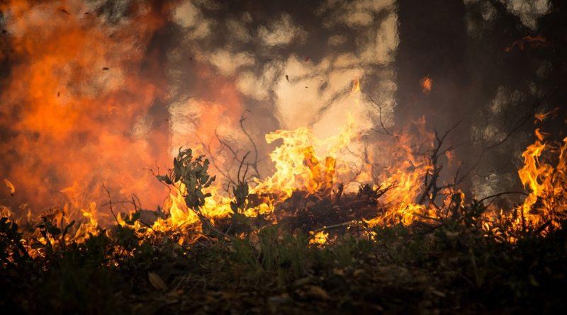 горски пожар, огън