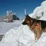 45 години работа със спасителни кучета отбелязва ПСС