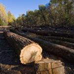 Мобилно приложение за подаване на сигнали за нарушения в горите пуснаха от WWF