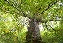 Защитени гори, Върхове