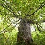 Проект за опазване на старите гори у нас беше отличен в конкурс на Европейската комисия